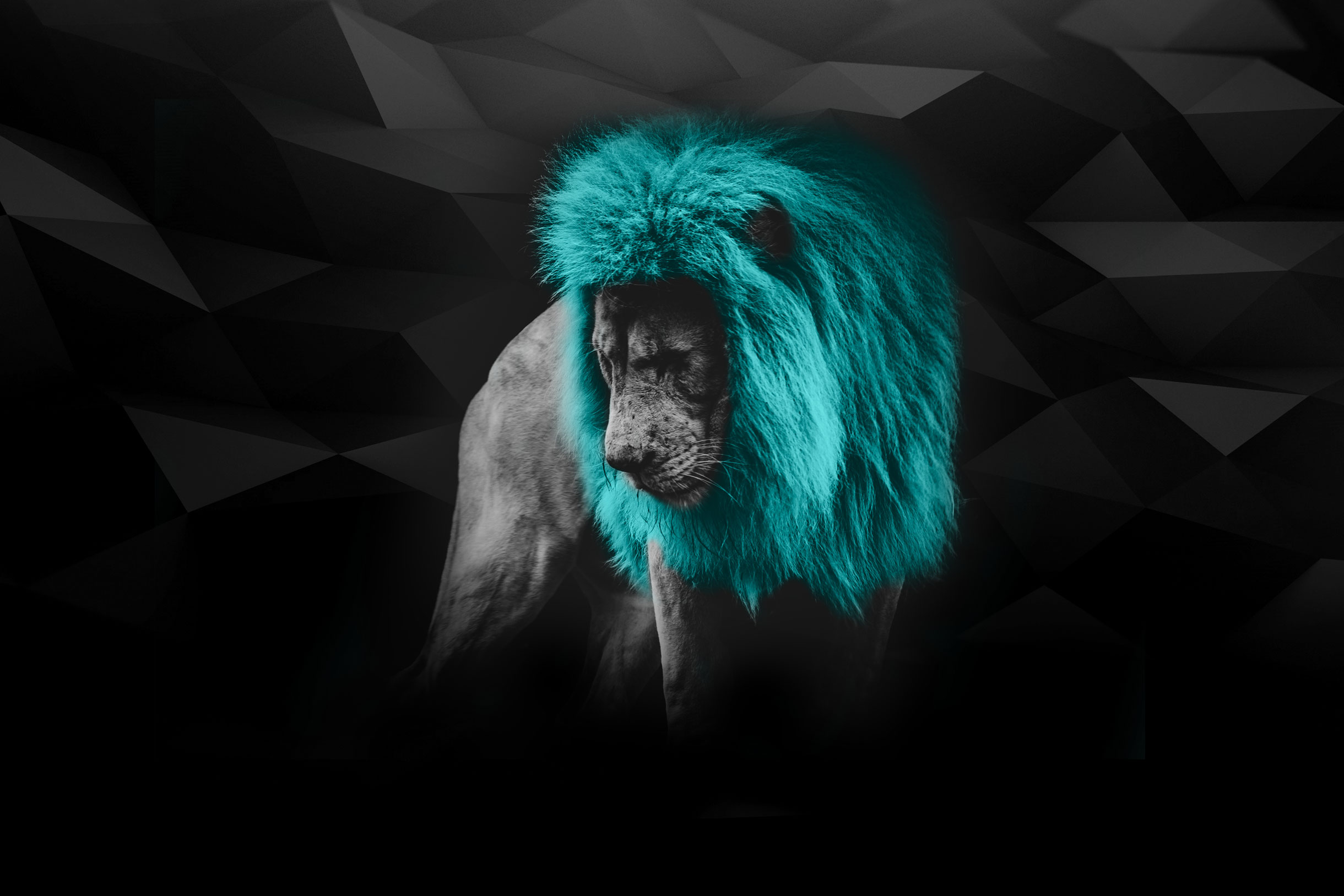myAgency-Contact-background lion