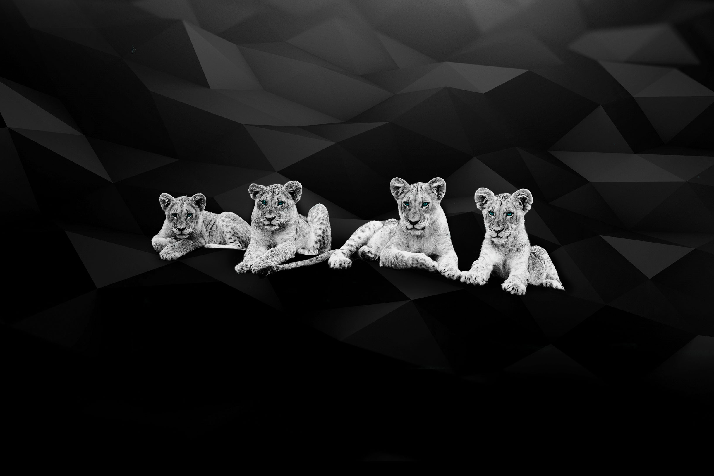 myAgency-Projets-background lion
